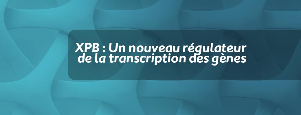 XPB : Un nouveau régulateur de la transcription des gènes